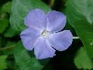 Blaue und violette Blüten